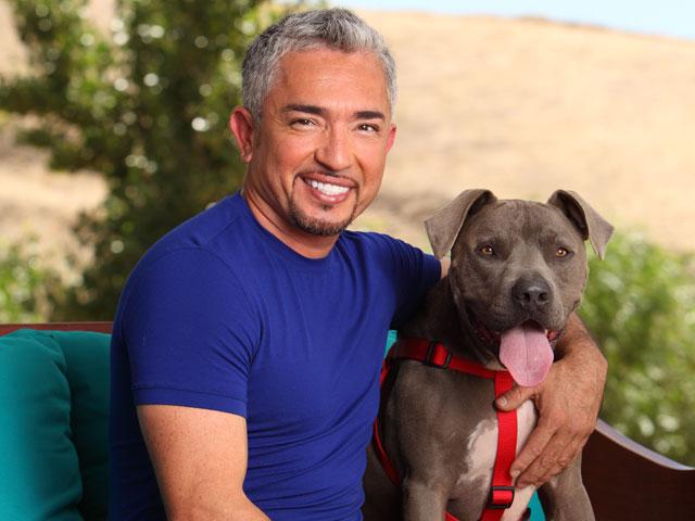 Cesar Dog Whisperer Training Puppy