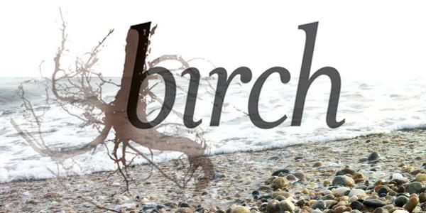 birch-intro-img